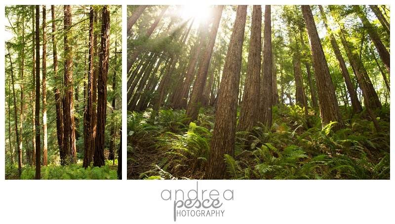 AndreaPescePhoto.com_0076
