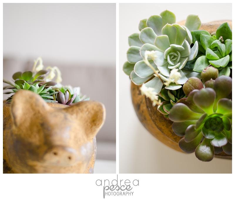 Succulent Garden-3