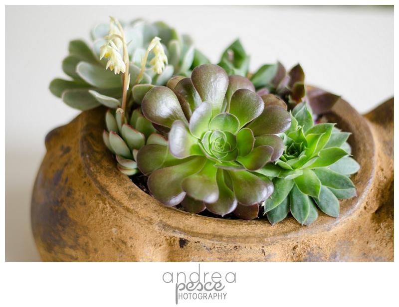 Succulent Garden-8